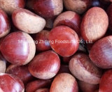 Chinese Fresh Chestnut for Exporting