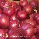 2017 New Crop Fresh Red Onion (5 cm and up)
