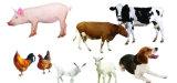 Animals Use of Veterinary Drugs-Ceftiofur