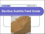 Bacillus Subtilis Feed Grade for Animal Feed Additives