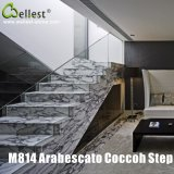 M814 Arabescato Coccoh Italy White Marble Step/Stairs/Treads with Bevel Edge
