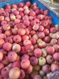 Shanxi Apple