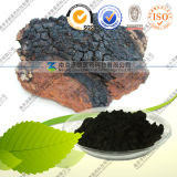Manufacturer Supply Inonotus Obliquus Extract with Good Quality Products Free Samples