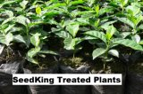 Plant Protection Plant Growth Regulatorseedking
