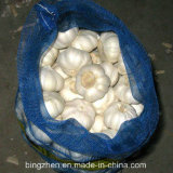 China Super Fresh Garlic - Spicy Vegetable for Export
