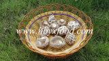 White Flower Mushroom Export to Singapore