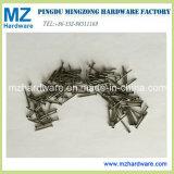 Factory Price Common Nail/Common Iron Nail