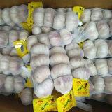 New Season Fresh Garlic with 200gx50 Package