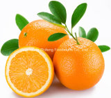 Chinese Fresh Quality Navel Orange