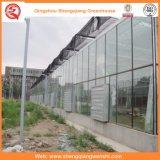 Potato/Tomato Glass Greenhouse with Ventilation System