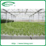 Substrates Nutrient Film Hydroponic System for tomato growing