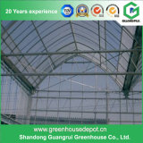 Best Price New Design Film Greenhouse Manufacturer on Sale
