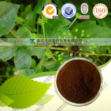 Factory Supply High Quality Acanthopanax Extract Isofraxidin