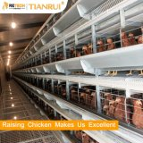 Good Price Automatic Poultry Farm Equipment Battery Layer Chicken Cage for Sale
