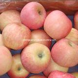 New Crop Fresh Chinese FUJI Apple