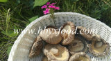 Edible High Quality Dried Smooth Shiitake Mushroom Agricultural Food