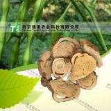 Manufacturer Supply Pure Natural Herb Medicine Ginseng Ren Shen