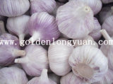 Normal White Garlic From Longyuan Since 2000