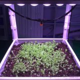 Concentrating More Efficient Patented Plant LED Light