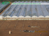 Multi Span Fixed Roof Vent Rose Greenhouse for Sale