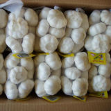 5.0cm and up Small Packing Pure White Garlic
