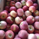 Plastic Bagged New Crop Fresh FUJI Apple