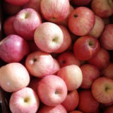 Fresh FUJI Apple Top Quality From China