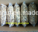 Hot Sale Roasted Peanut in Shell New Crop 2017