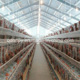 Full Set Steel Structure Poultry House and Cage Feeding System