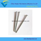 Hot Dipped Galvanzied Common Nails