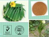 Manufacturer Supply Natural Okra Extract Powder