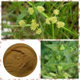Caper Euphorbia Seed Extract