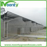 Economical Multi-Span Plastic Film Greenhouse