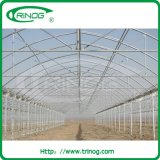 Agricultural greenhouse with plastic film