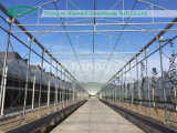 Tomato Vegetable Greenhouse for Sale