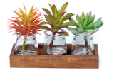 Set of 3 Artificial Succulent Plants with Transparent Glass Pots for Decoration