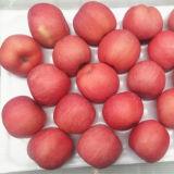Fresh FUJI Apple Best Selling Price
