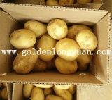 Fresh New Crop Potato From Shandong Origin