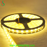 DC 24V Flexible LED Strip Light