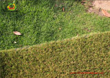 8 Years Warranty Artificial Grass for House Green