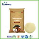 Innovated Equine Veterinary Probiotic Feed Ingredients Horse Food