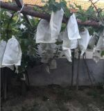 Table Grape Protection Kraft Papar Bag for Fruit Grow to Cut Down The Costs of Cultivation and Get The Fruits Without Any Insecticide