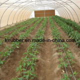 Dripping Irrigation Equipment for Agriculture Greenhouse
