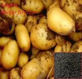 Improve The Organic Gardening Soil with Biochar Based Organic Fertilizer