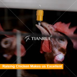 Tianrui Automatic Poultry Drinking System For Layer Farm