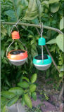 Own Factory Hotsale and Cheap Mini Solar Lamp (SF-3)