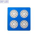 Chinese Red and Blue LED Grow Lights for Zucchini Flower