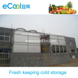 Vegetables Fruits Cold Room for Large Processing Plant and Fresh Keeping Warehouse