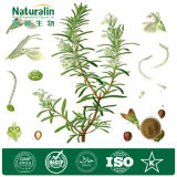 Herb Rosemary Extract Powder Rosmarinic Acid 100% Natural