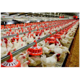 Automatic Set of Pan Feeder Poultry Equipment for Breeders